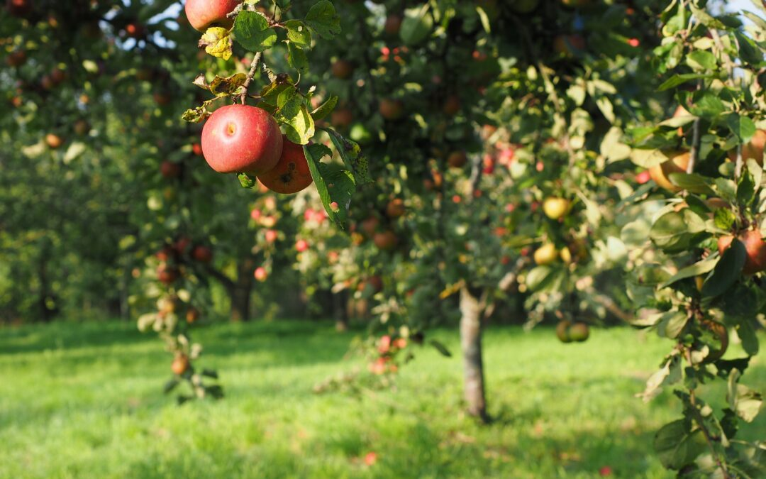 Asheville's Fall Activities: The 3rd Annual CiderFest NC