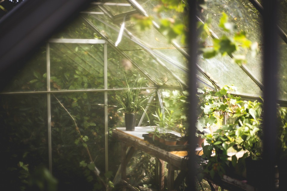 What to Grow in a Community Greenhouse